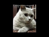 «Наши котики - 5» под музыку Jan A.P. Kaczmarek  - тронуло до глубины...(Музыка из фильма Хатико-самый верный друг). Picrolla